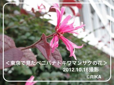flower@tokyo16/10/12