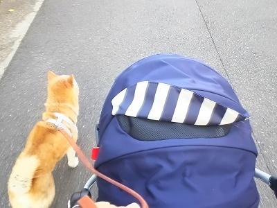 赤ちゃんと犬の散歩