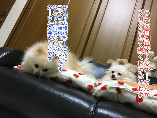 IMG_7863blog.jpg