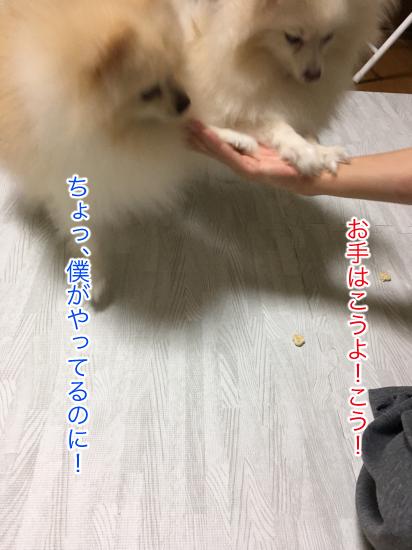 IMG_7926blog.jpg