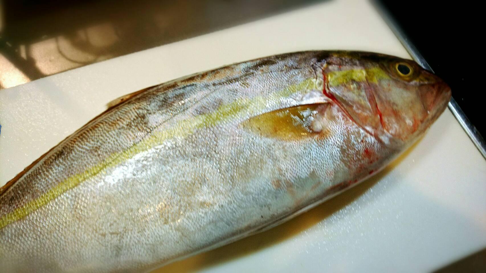 【魚のおろし方】カンパチ一本丸ごとさばく