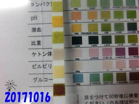 20171016CIMG8154.jpg