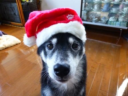2017クリスマス (4)