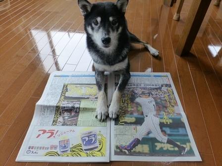 阪神2018記念品15