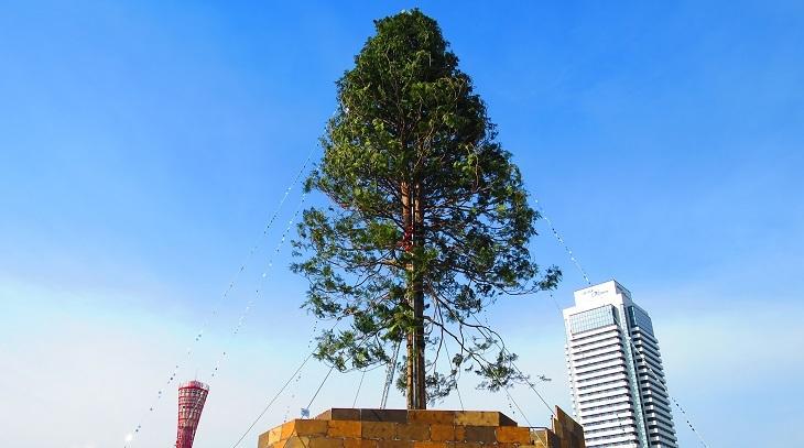 IMG_4500クリスマスツリー