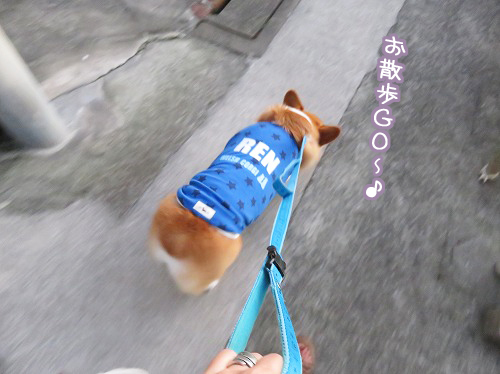 お散歩GO~