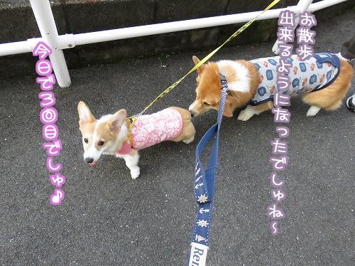 お散歩OK☆
