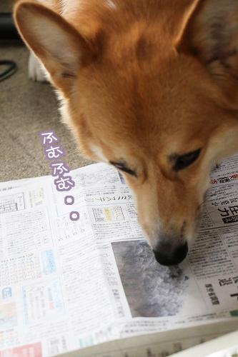 新聞を読む犬