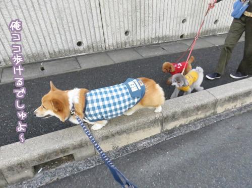 一緒にお散歩☆