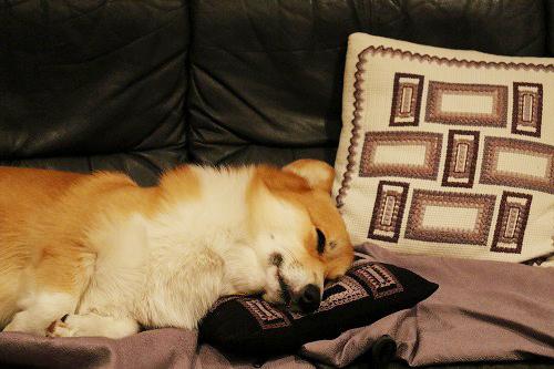 ソファ~で寝るれんたん