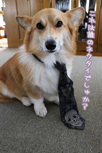 誰のネクタイでしゅか?