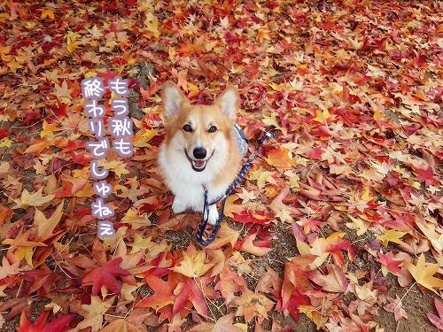 もう秋も終わり