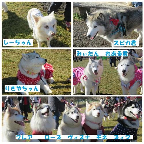 collage_photocat291209-4.jpg