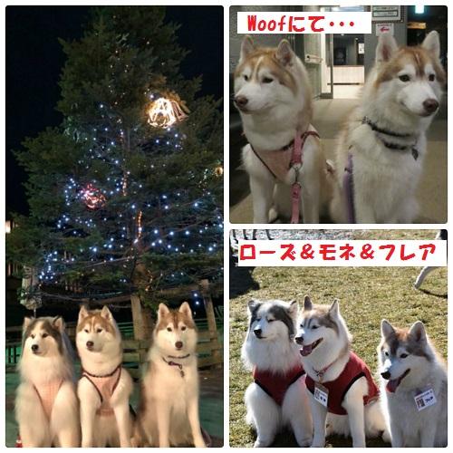 collage_photocat291213-1.jpg