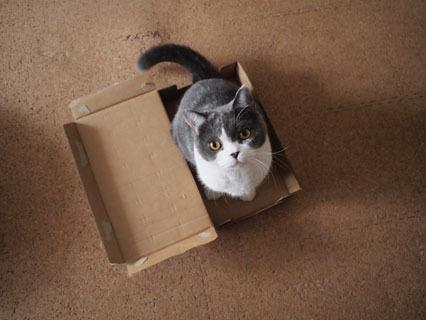 この箱すき