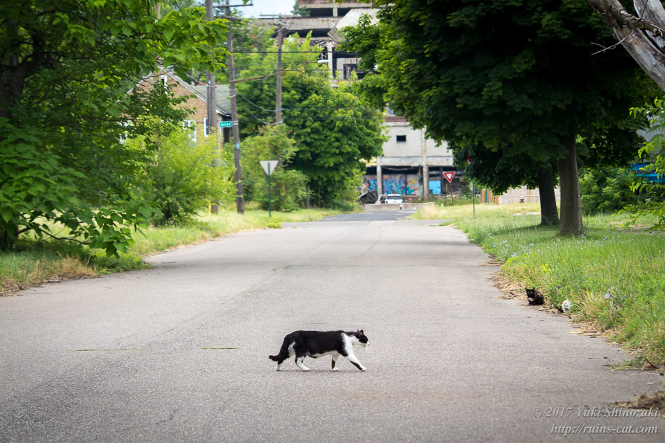 パッカード自動車工場前をてくてく歩く猫