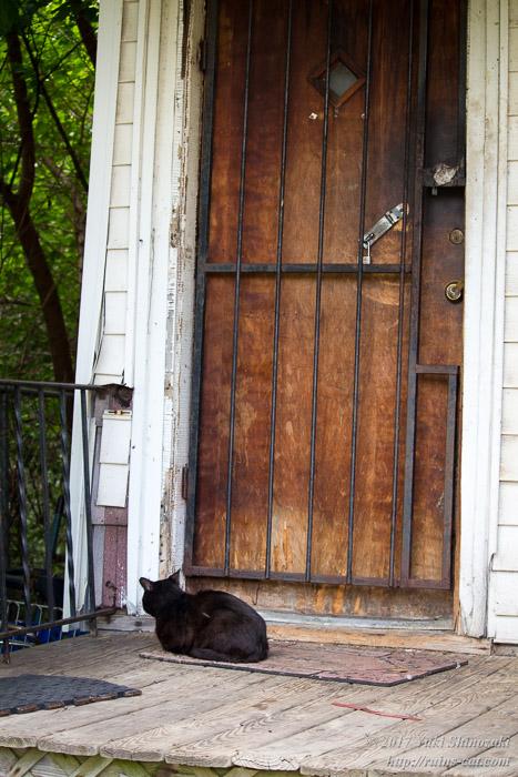 デトロイトの猫屋敷 Jail Style