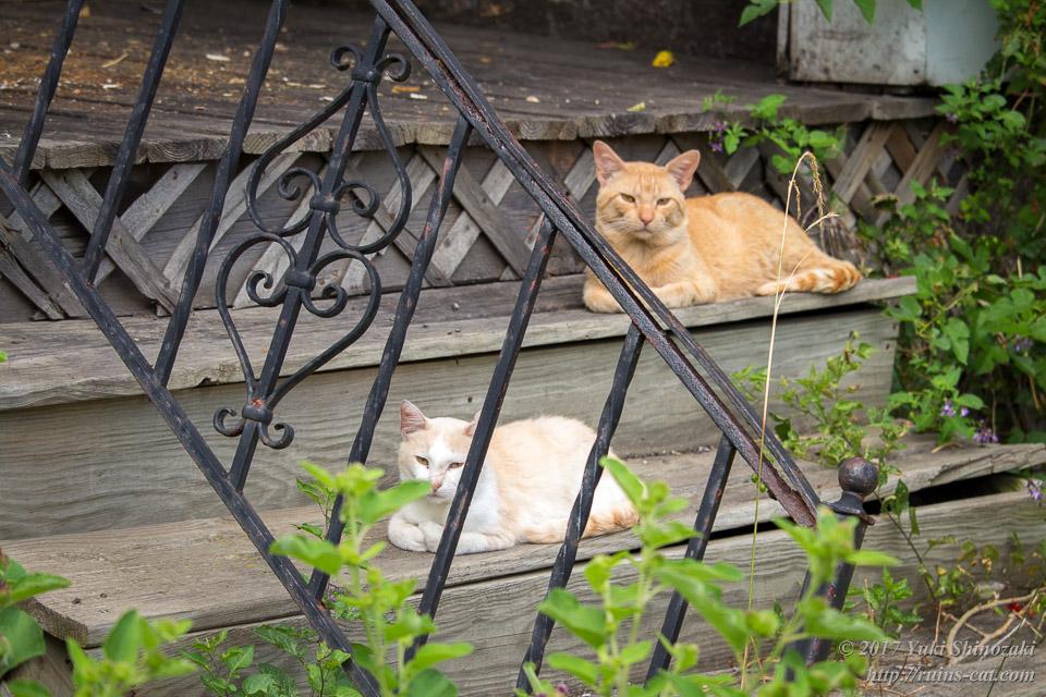 デトロイトの猫 こっちを見てる