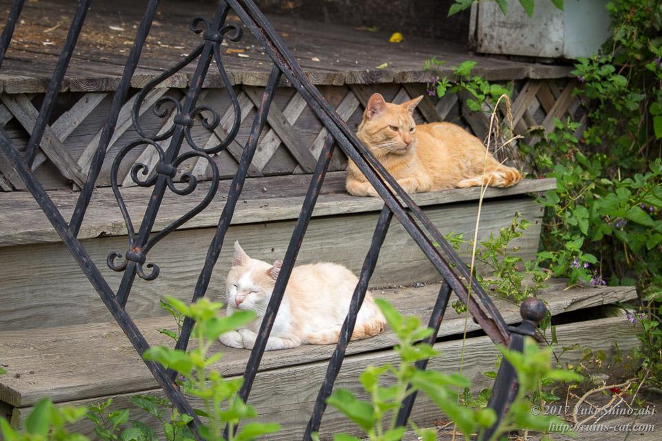 デトロイトの猫 そっぽを向かれる