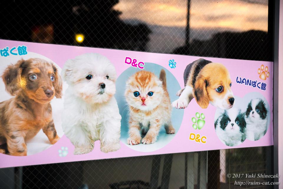 ペットのポスター その2