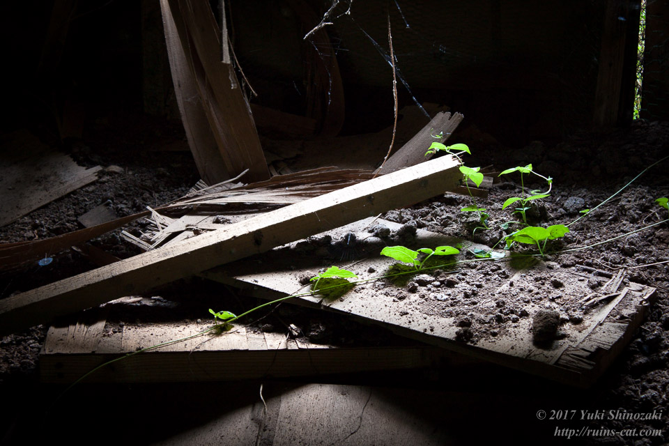 窓からの光に照らされる葉