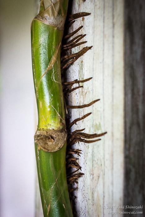 根性のある沖縄の植物