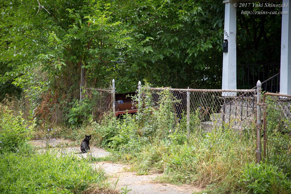 猫屋敷前の黒猫