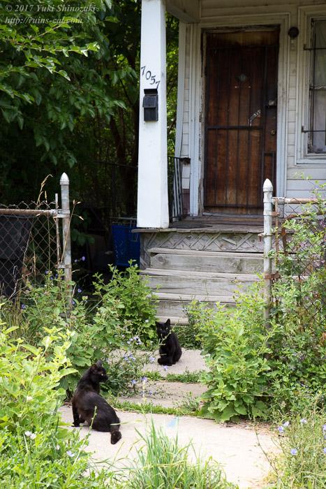 入口に居る2匹の黒猫