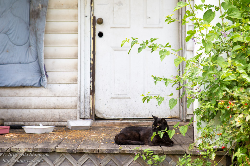 デトロイトの猫屋敷 餌付けされている様子