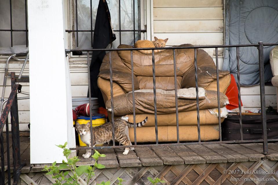 猫屋敷のソファと猫