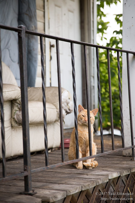 デトロイトの猫 茶トラ