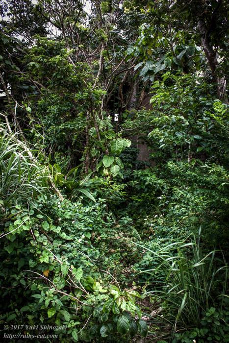 アクセス路は薮に覆われる