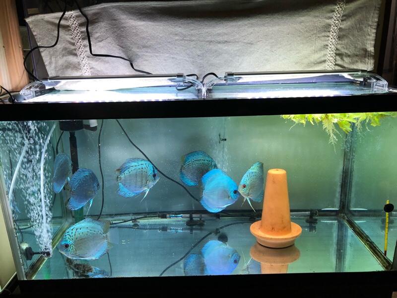 90水槽LED交換