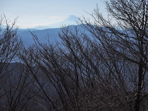 川苔山から富士山