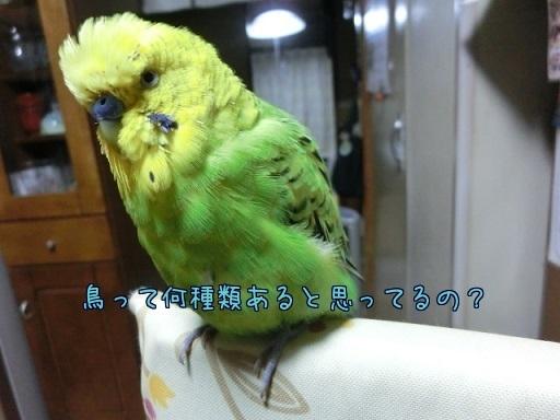 鳥って何種類