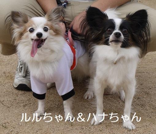 ルルちゃん&ハナちゃん