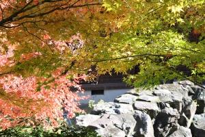 紅葉と向日葵3