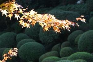 紅葉と向日葵2