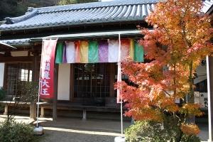 紅葉と向日葵4