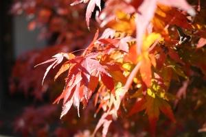 紅葉と向日葵5