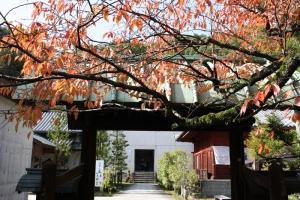 紅葉と向日葵6