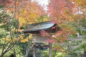 紅葉と向日葵10