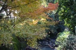 紅葉と向日葵11