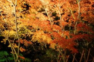 栗林公園ライトアップ7