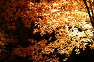 栗林公園ライトアップ8