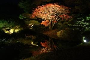 栗林公園ライトアップ11