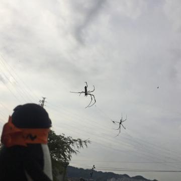 20170930-蜘蛛 (6)