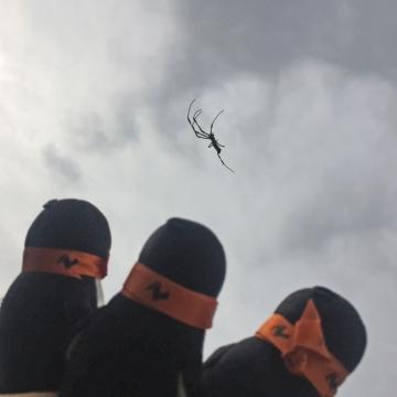20170930-蜘蛛 (2)