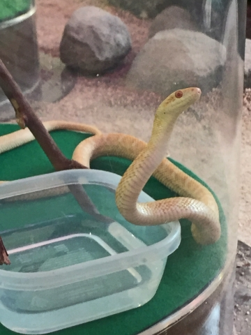 20171001-岩国シロヘビの館 (7)