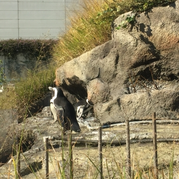 20171104-サンシャイン水族館 (1)